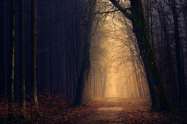 mlha v lese.jpg